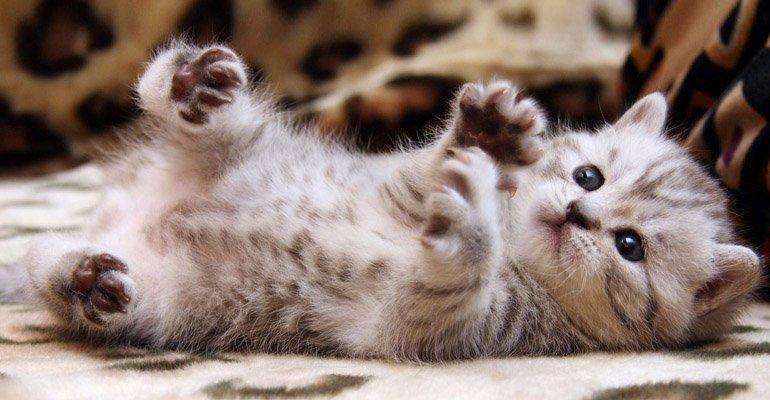 Kedi Günlüğü