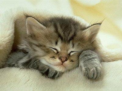 Bir kedinin her iki kulağında da 32 kas bulunuyor.