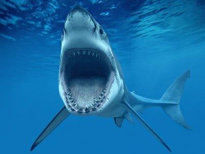 Köpek balıkları iki gözünü birden kırpabilen tek balık.