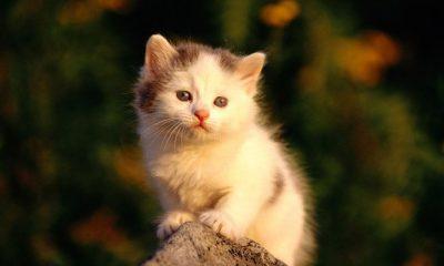 Minicik Bir Kedi ve Umut Bu Toprakları Terk Etmedi