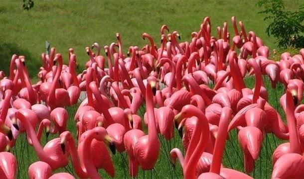 Dünya'da gerçeğinden fazla, yapma flamingo bulunmaktadır.