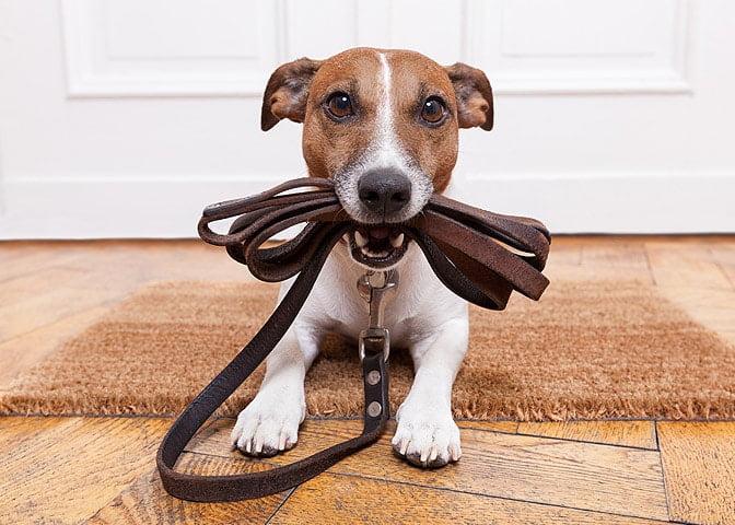 Hızlı Kilo Verme için 16 Yöntem: 16. Evcil Dostunuz ile Yürüyüşe Çıkın